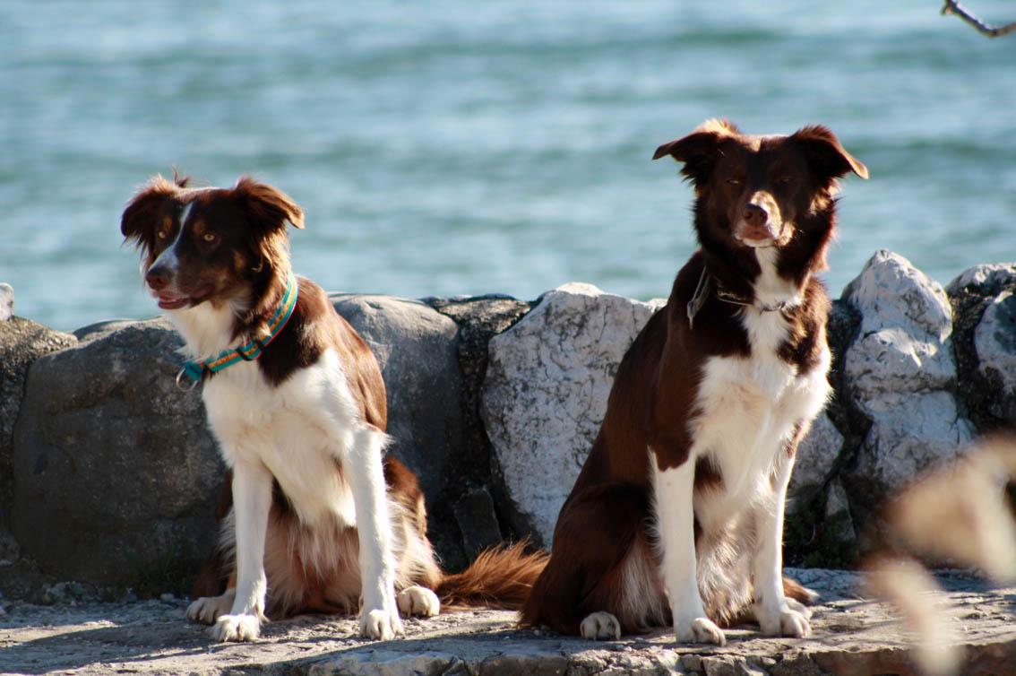 Faye und Hazel